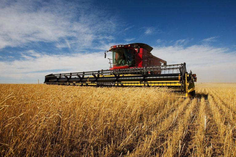 В Херсонской области отмечается высокий рост урожая пшеницы